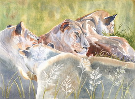 Lions 2 Watercolour by Jennifer Horn