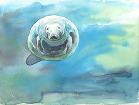 Manatee by Jennifer Horn