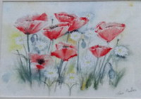 Poppies and Daisies by Tina Pedlar